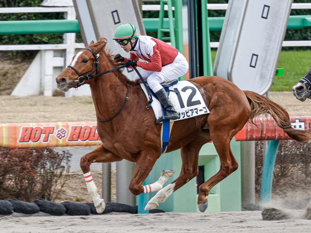 石橋脩騎手騎乗の1番人気サッビアマーゴが勝利(撮影:下野雄規)