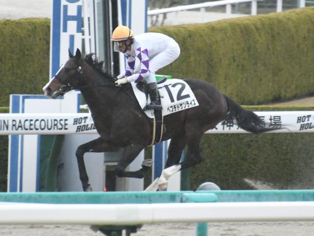 ペプチドサンライズが8馬身差の圧勝