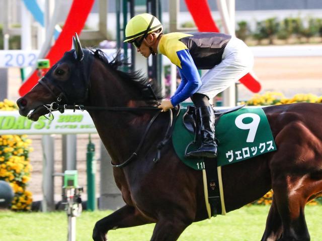 3着に敗れた前走から巻き返しを図るヴェロックス(c)netkeiba.com、ユーザー提供:みゅーがさん