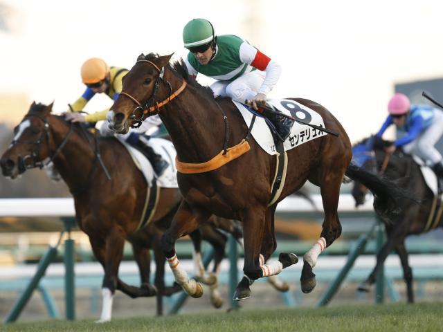 オールカマーの勝ち馬センテリュオに注目したい(撮影:下野雄規)