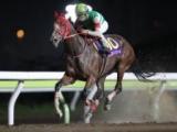 【大井・TCK女王盃】マルシュロレーヌ・マルカンセンサーの騎乗予定騎手が発表