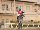【川崎記念】オメガパフューム、ダノンファラオ、チュウワウィザードなど登録馬が発表
