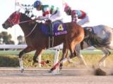 【TCK女王盃回顧】ダート牝馬の頂点狙うマルシュロレーヌ(斎藤修)