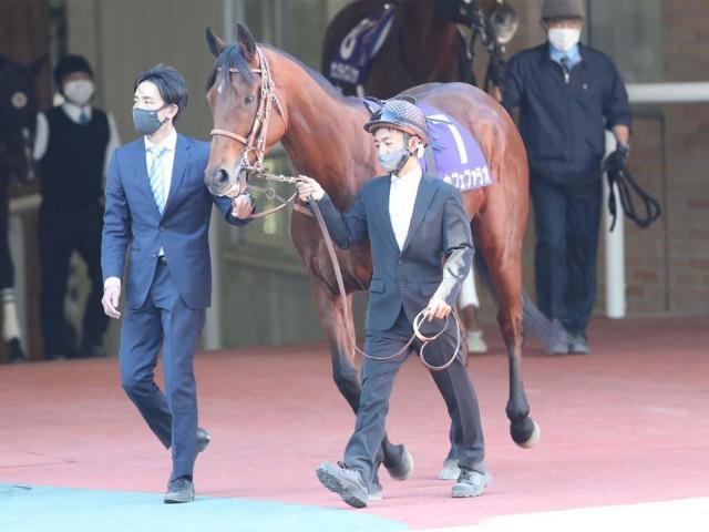 【次走】カフェファラオはフェブラリーSへ、鞍上はC.ルメール騎手