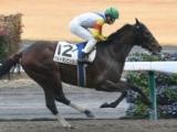 【中京3R新馬戦結果】ウルトラソニックが人気に応えて快勝