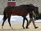 フィエールマン、ジャスタウェイなど15頭お披露目 種牡馬展示会が2月3日からスタート