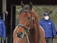 米G1馬ナダルなど新種牡馬5頭含む28頭展示 社台SSで種牡馬総合展示会が開催