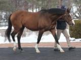 フランケルの全弟ノーブルミッション含む9頭、JBBA静内種馬場で種牡馬展示会開催