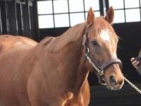 モズアスコットなど新種牡馬4頭含む32頭、アロースタッドで種牡馬展示会開催