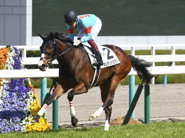 京都牝馬Sに出走予定のギルデッドミラー