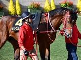 【サウジCデー】2騎手が入国不可になり騎乗変更、サウジダービーのピンクカメハメハは戸崎圭太騎手に