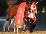 【川崎・エンプレス杯予想】女帝の座をかけた熱い戦い 2007年以来の地方馬Vなるか!?