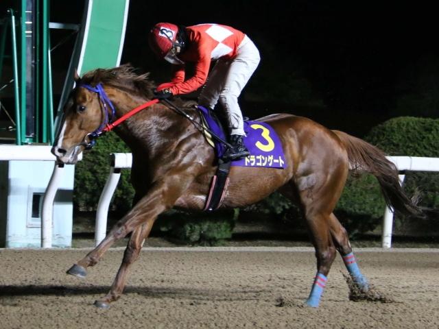 ウインターチャンピオンに出走する昨年覇者ドラゴンゲート(写真提供:佐賀県競馬組合)