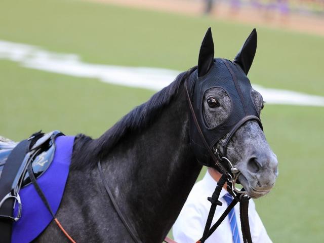 クロノジェネシスなど日本馬7頭がドバイ到着(写真は2020年有馬記念優勝時、ユーザー提供:J-Matsudaさん)