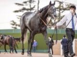 【ドバイシーマクラシック】日本の牝馬2頭はともに外目からの発走