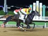 【ドバイゴールデンシャヒーン展望】日本馬に凱歌が上がっても不思議ではない