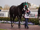 【海外競馬】日本馬メールドグラースがトルコで種牡馬入り、豪G1コーフィールドC覇者