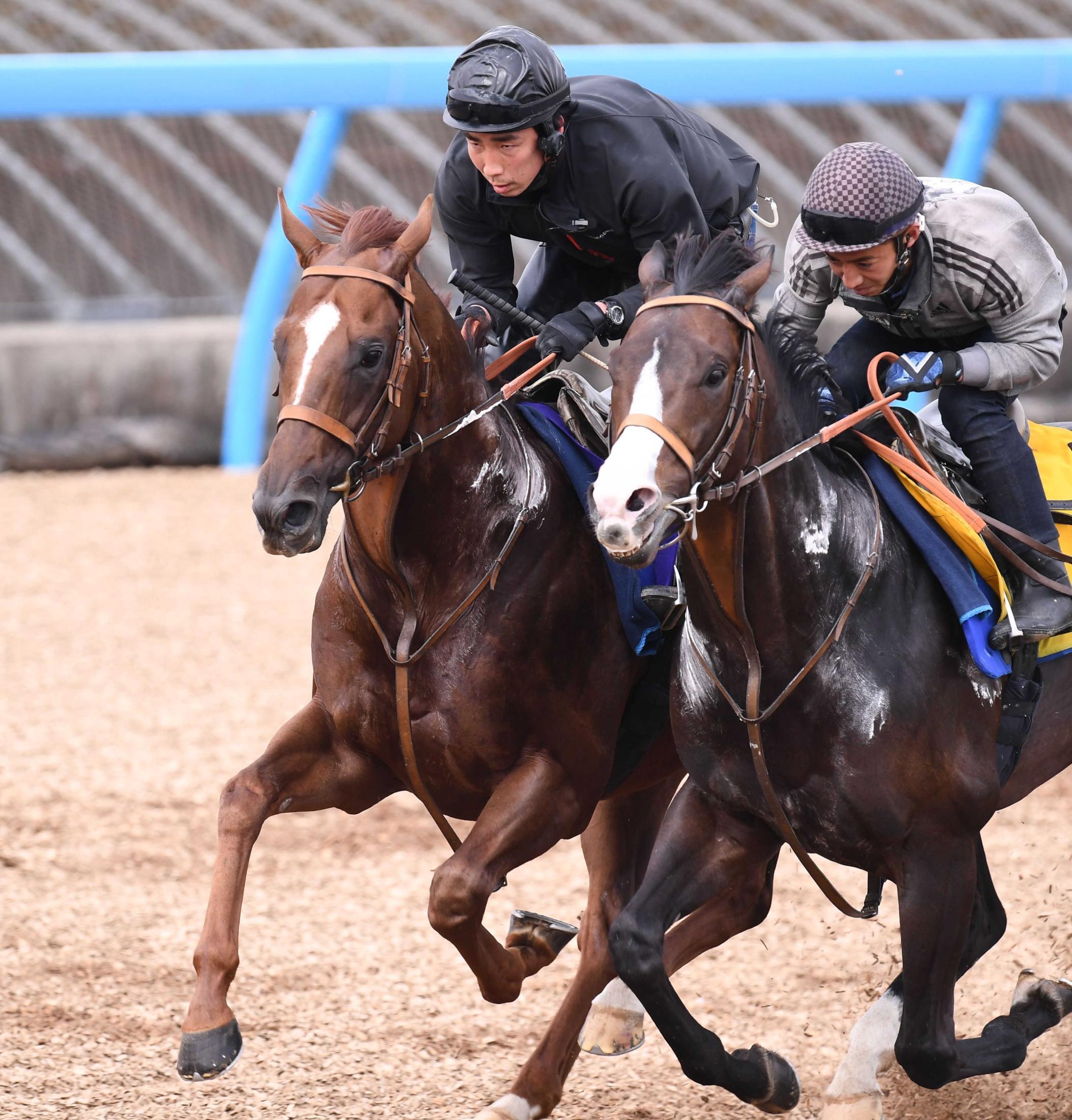 併せ馬で態勢を整えたサリオス(左)=撮影・園田高夫