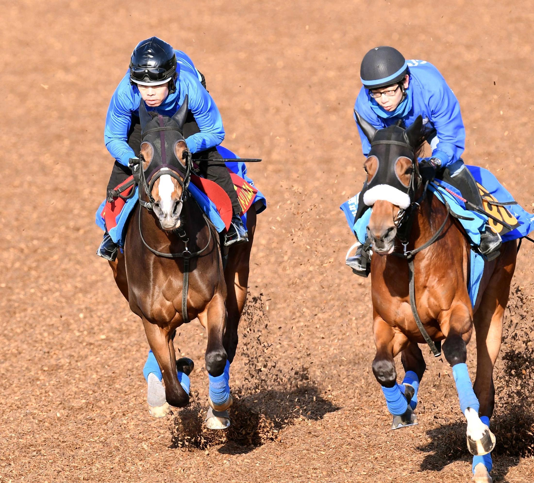 併せ馬を行ったアカイトリノムスメ(左)=撮影・園田高夫