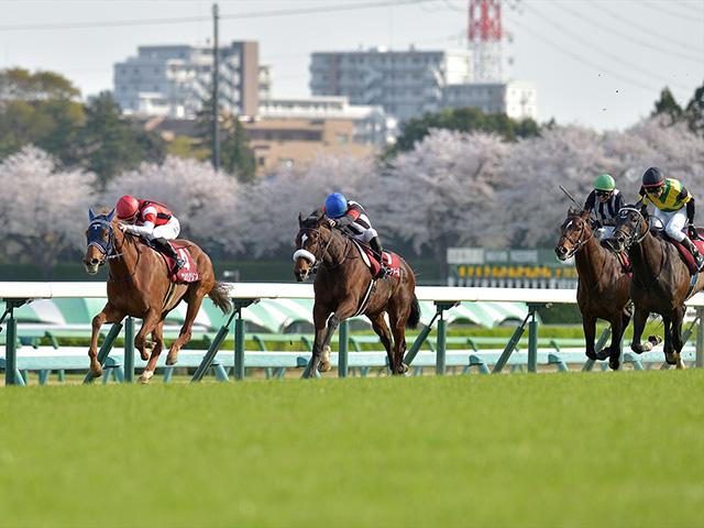ウインマリリン、カレンブーケドールの牝馬ワンツーだった日経賞(撮影:小金井邦祥)