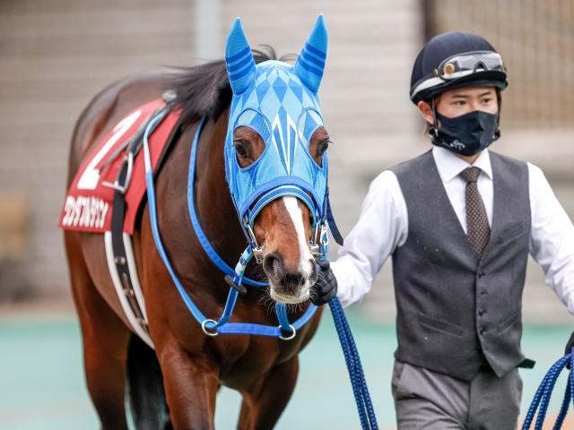 和田竜二騎手騎乗のワンダフルタウン(c)netkeiba.com、撮影:下野雄規