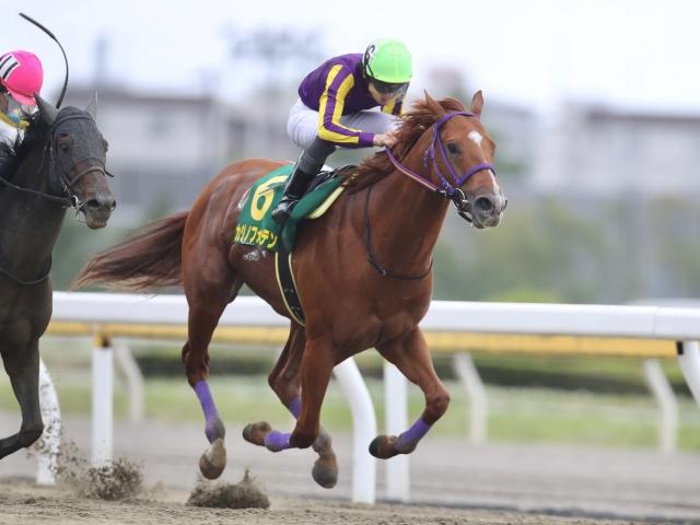 フリオーソ以来10年ぶりの地方馬制覇を成し遂げたカジノフォンテン(撮影:高橋正和)