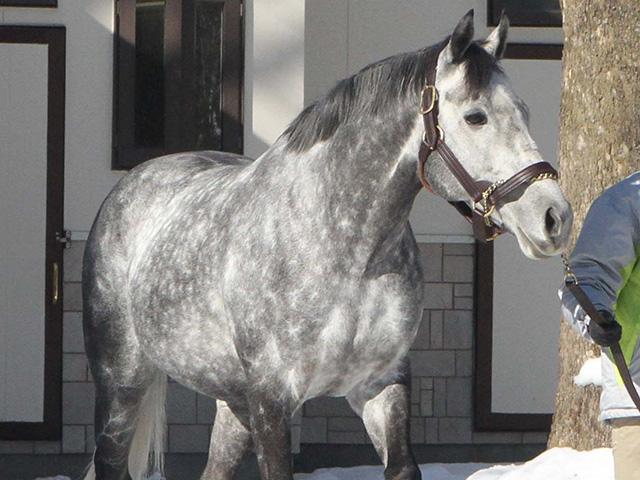 種牡馬展示会登場時のウインブライト