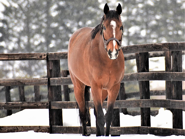 現在はアロースタッドでけい養されている新種牡馬ディーマジェスティ(ユーザー提供:ねねこさん)