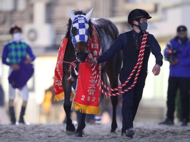 南関牝馬クラシック3冠制覇の懸かるケラススヴィア(撮影:高橋正和)