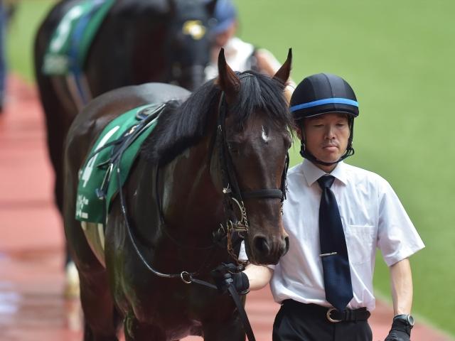 勝利したトーラスジェミニ(c)netkeiba.com、撮影:小金井邦祥