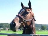 アサヒライジングが6頭目の受け入れ馬に ナイスネイチャ・33歳のバースデードネーション