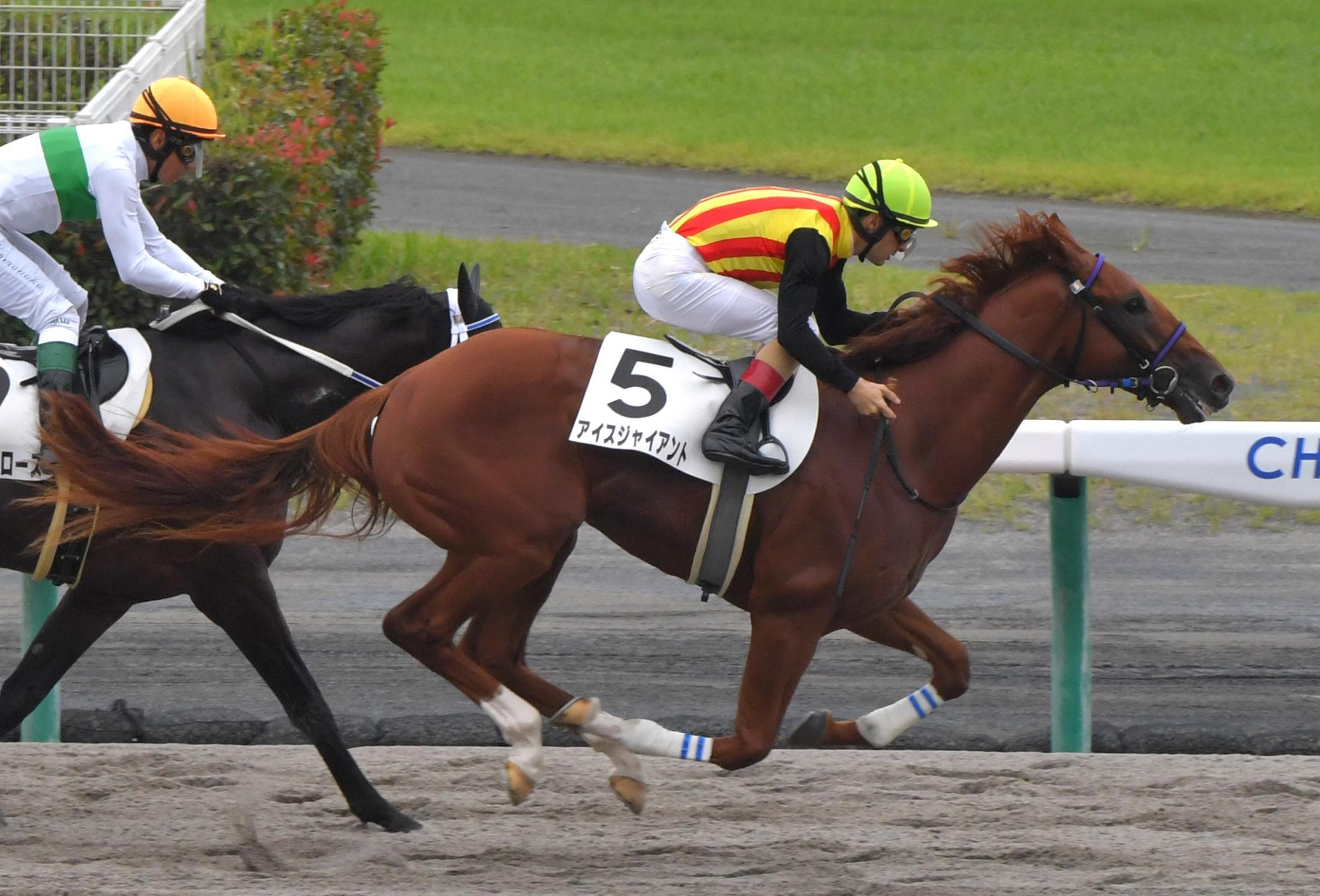 中京3Rの新馬戦を制したアイスジャイアント