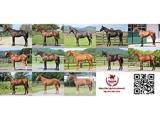 「ヒポファイル・ブラッドストック」が1歳馬の募集を開始