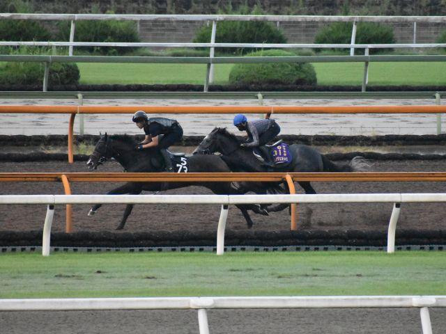 凱旋門賞に向けて追い切りを行っているクロノジェネシス(写真右、撮影:井内利彰)