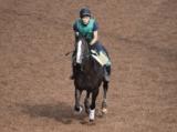 【JRA新馬戦】3日間で11鞍、アリストテレス半弟ら注目馬が続々デビュー