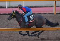 【スプリンターズS】ヨカヨカ 闘争本能むき出し 九州産馬初のG1制覇へ上昇気配