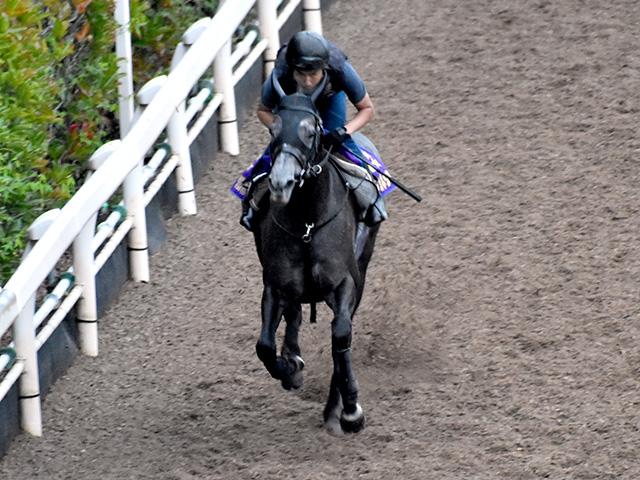 日本馬クロノジェネシスは6番人気タイ(撮影:井内利彰、撮影日は9月14日)