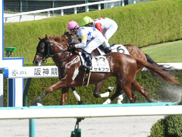 戸崎圭太騎手騎乗のセキフウが勝利した(c)netkeiba.com