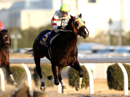 圧倒的な人気を集めた幸英明騎手騎乗のホッコータルマエがムスカテールを1/2馬身退けて優勝。GI・5勝目を挙げた/川崎記念(撮影:高橋 正和)