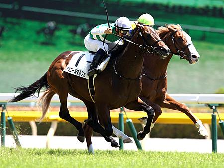 センスあふれる勝ちっぷりだったアヴニールマルシェ(写真は2014年新馬優勝時、撮影:下野雄規)