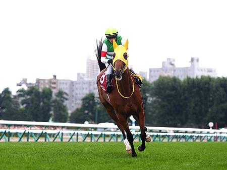 ハープスターは引き続き川田将雅騎手とのコンビでジャパンCへ | 川田将雅オフィシャルサイト