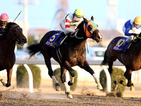 圧倒的支持に応え連覇をはたしたホッコータルマエ(写真は2015年川崎記念優勝時、撮影:高橋正和)