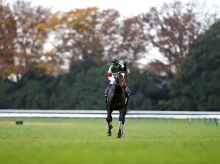 エピファネイア(写真は2014年ジャパンC優勝時、撮影:下野雄規)
