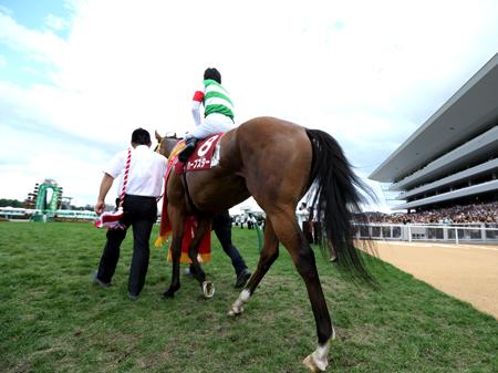 引退が発表された昨年の桜花賞馬ハープスター(写真は2014年札幌記念優勝時、撮影:高橋正和)