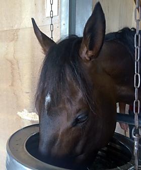 青森県のスプリングファームで種牡馬入りすることになったウインバリアシオン(取材・写真:花岡貴子)