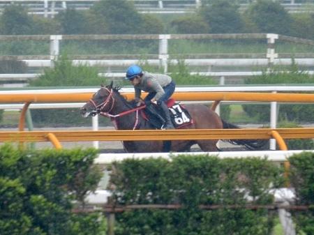 福永騎手が跨って神戸新聞杯の1週前追い切りを行ったリアルスティール(撮影:井内利彰)