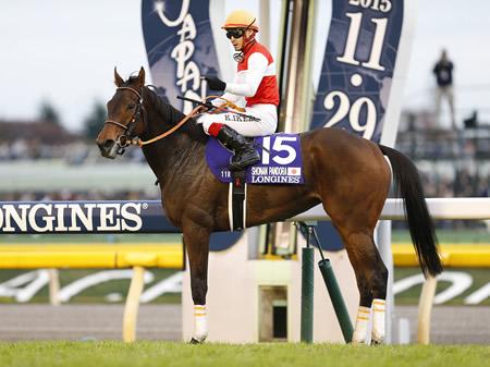 有馬記念を回避したショウナンパンドラ(写真はジャパンカップ優勝時、撮影:下野 雄規)