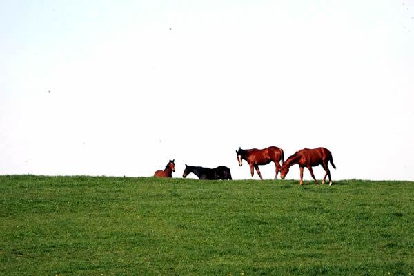 とある牧場での風景(写真と本文とは関係ありません)
