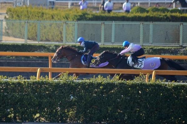 スワーヴリチャードは「馬がジョッキーを信頼して走っている」というイメージ(12月20日撮影) style=