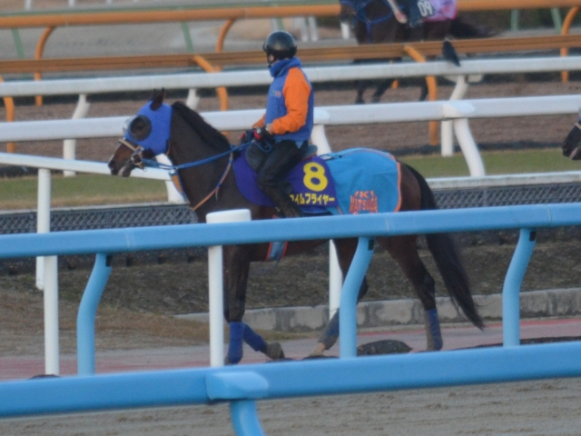タイムフライヤーは力のいる馬場や直線急坂のコースでも全く問題はなさそう(12月26日撮影)style=